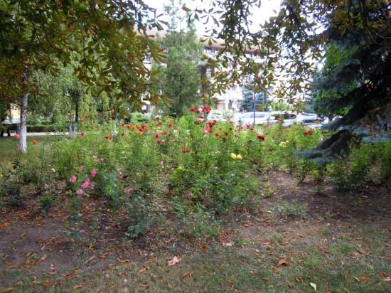 Parc Primarie Botosani 2