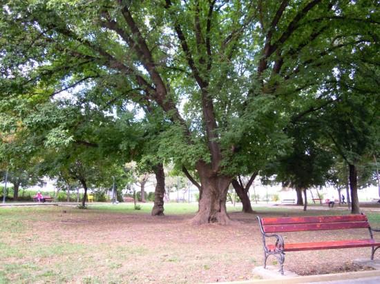 Parcul Tineretului Botosani 5